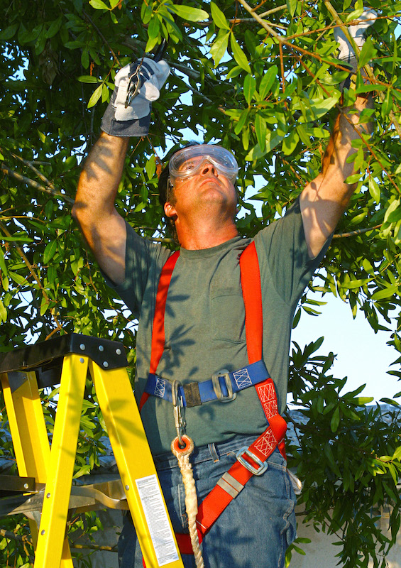 tree trimming wichita ks